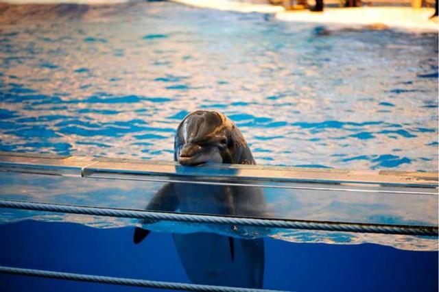 1_delfin-diarioecologia.jpg