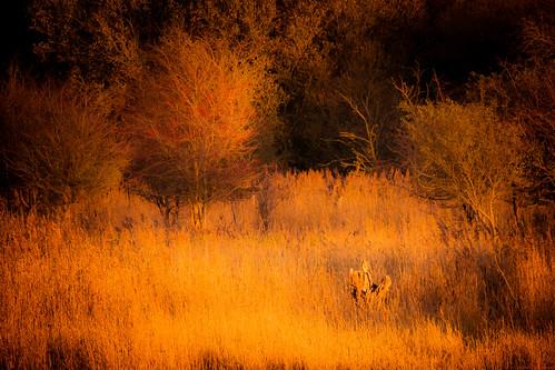 autumn light sunset fowlmere