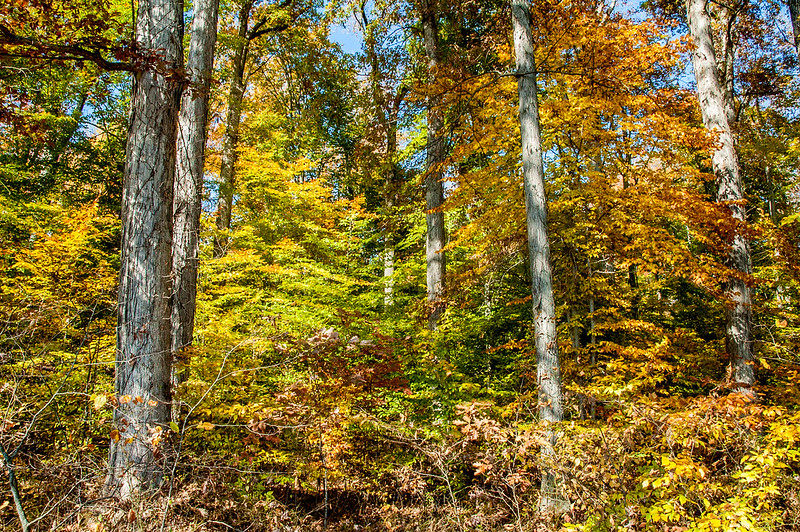 Guthrie Memorial Woods Nature Preserve - October 25, 2014