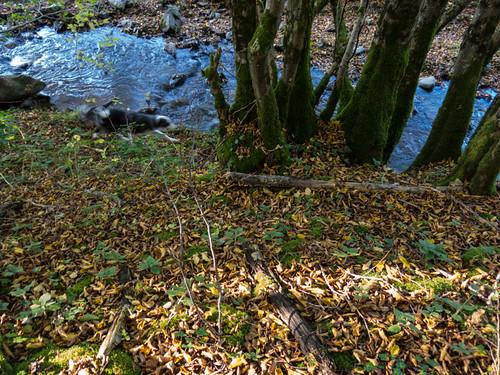 Ruisseau de Champotier