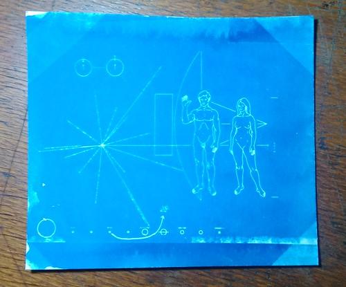 13.  Cyanotypes - Pioneer