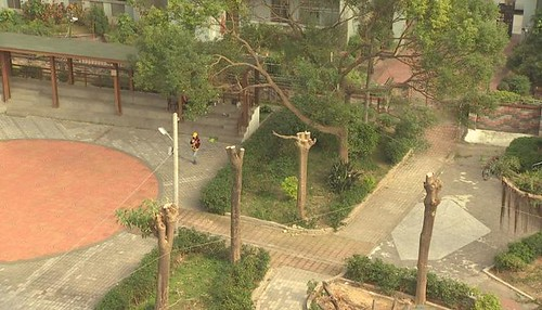649城市裡的樹木哀歌