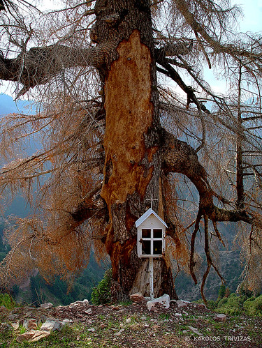 tree shrine greece deadtree bark trunk stub coniferous marterl evritania iconostasis roadsideshrine roadshrine agrafa heiligenstatue materl heiligenbeelden koplytstulpiai heiligenhauschen