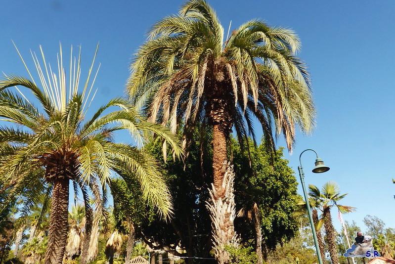 Los Angeles Zoo 184
