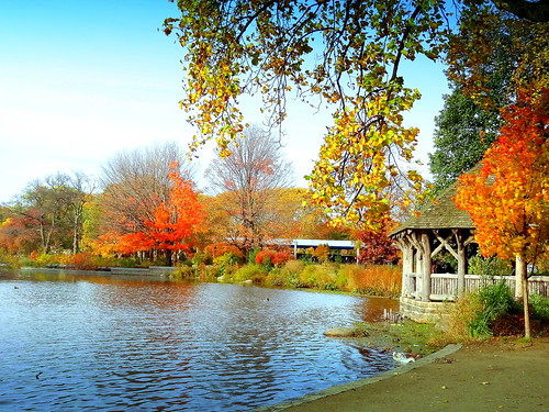 autumn newyork brooklyn image prospectpark dmitriyfomenko fall42014