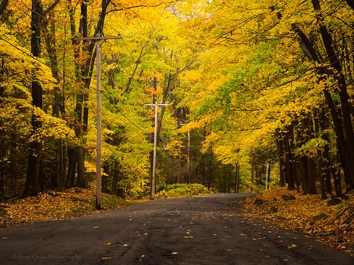 road autumn trees fall leaves forest massachusetts newengland olympus omd em5 45mmf18mzuiko