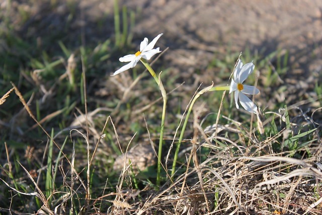 20141102_1938-white-flowers