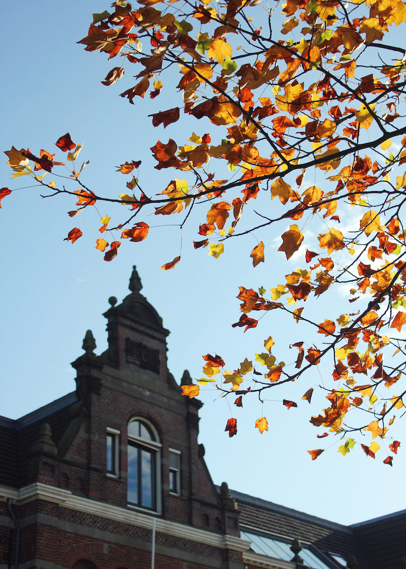 Fall leaves Westergasfabriek Amsterdam