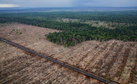 夾板,這繁榮半個世紀的產品,全世界消費者與婆羅洲的天堂森林緊密相連。圖片來源:Ulet Ifansasti / Greenpeace