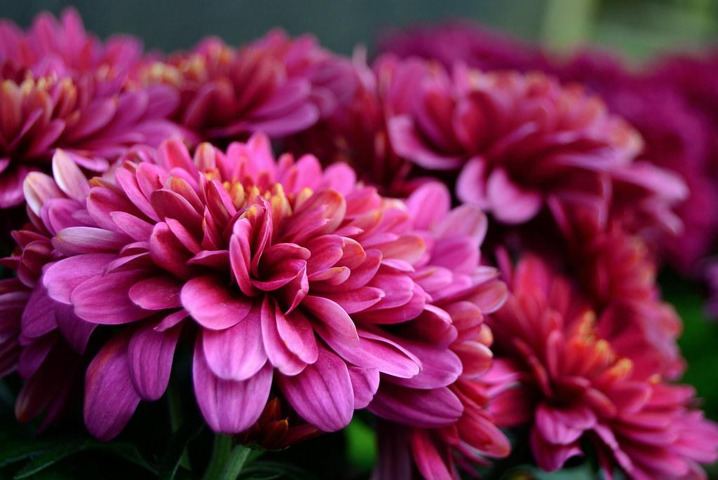 10 cosas que jam s deber as regalar en china planeta curioso - Dan mala suerte las hortensias ...