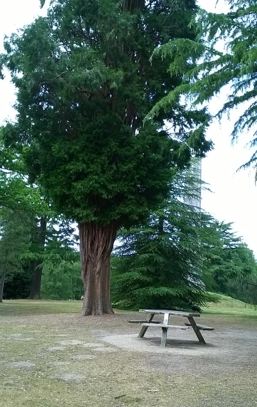 Picnic spot near Savill gardens