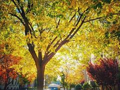 Sunny Sunday in Kew Gardens, NY  Blackberry PRIV :^)