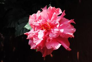 Flor de Taquile