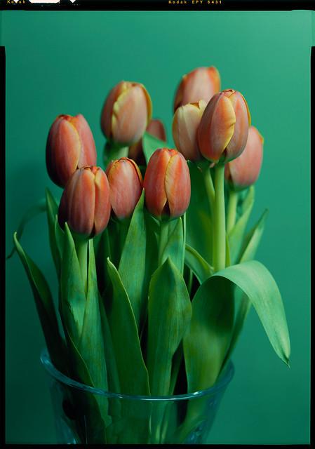 Tulips on Ektachrome 64T