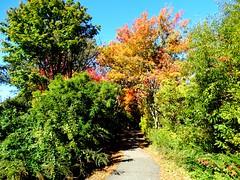 Mill Pond Park -- Autumn (14)