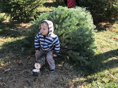 Sawyer sits on our freshly cut down Christmas tree and stump