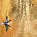 eaglespiritsoaring has added a photo to the pool: