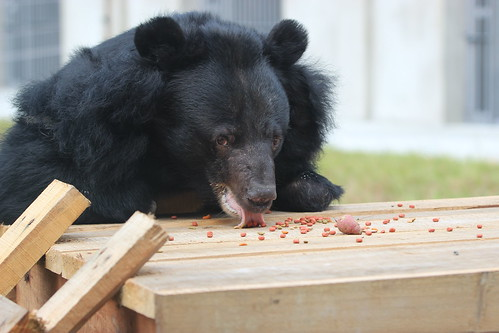 Dream Mischa Tebs enjoys food in her enclosure 3