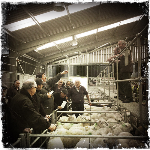 Monmouthshire Livestock Market