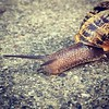 #snailracing #natureisbadass (in a slow way) #snail #escargot #garlic