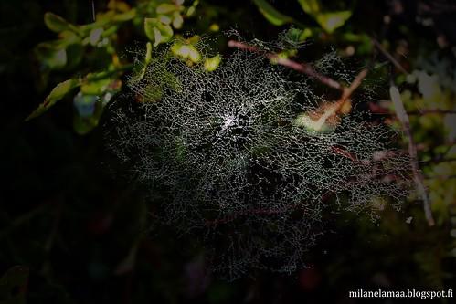 hämähäkinseitti1