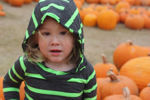 Pumpkin Patch 2014