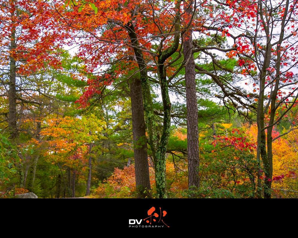 ►►► New York Autumn 2014 秋 ● DV ◄◄◄