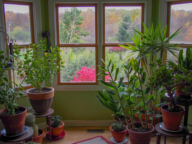 Houseplants In 2014