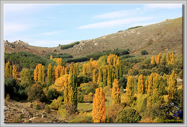 Tuit Quedada Micológica en Gredos (12)