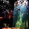 Vertical Fish Tank | #VisitMalaysia #igersMY | #AquariaKLCC | Kuala Lumpur | Malaysia