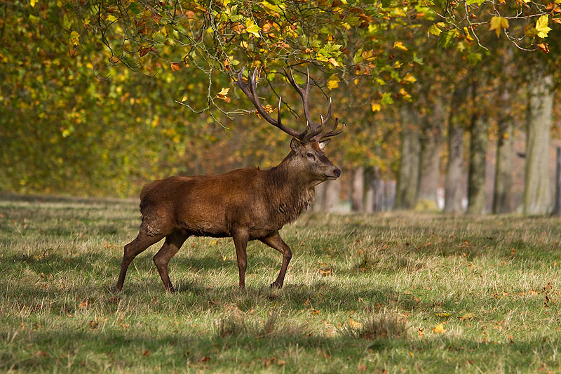 Autumn in Windsor Great Park