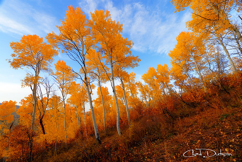 autumn trees light mountain mountains color tree fall nature leaves yellow forest season landscape rockies gold evening utah leaf wasatch glow dusk hill rocky aspens wilderness aspen americanwest onthehill chaddutson