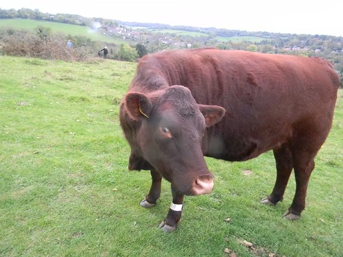 Cow, Farthing Down