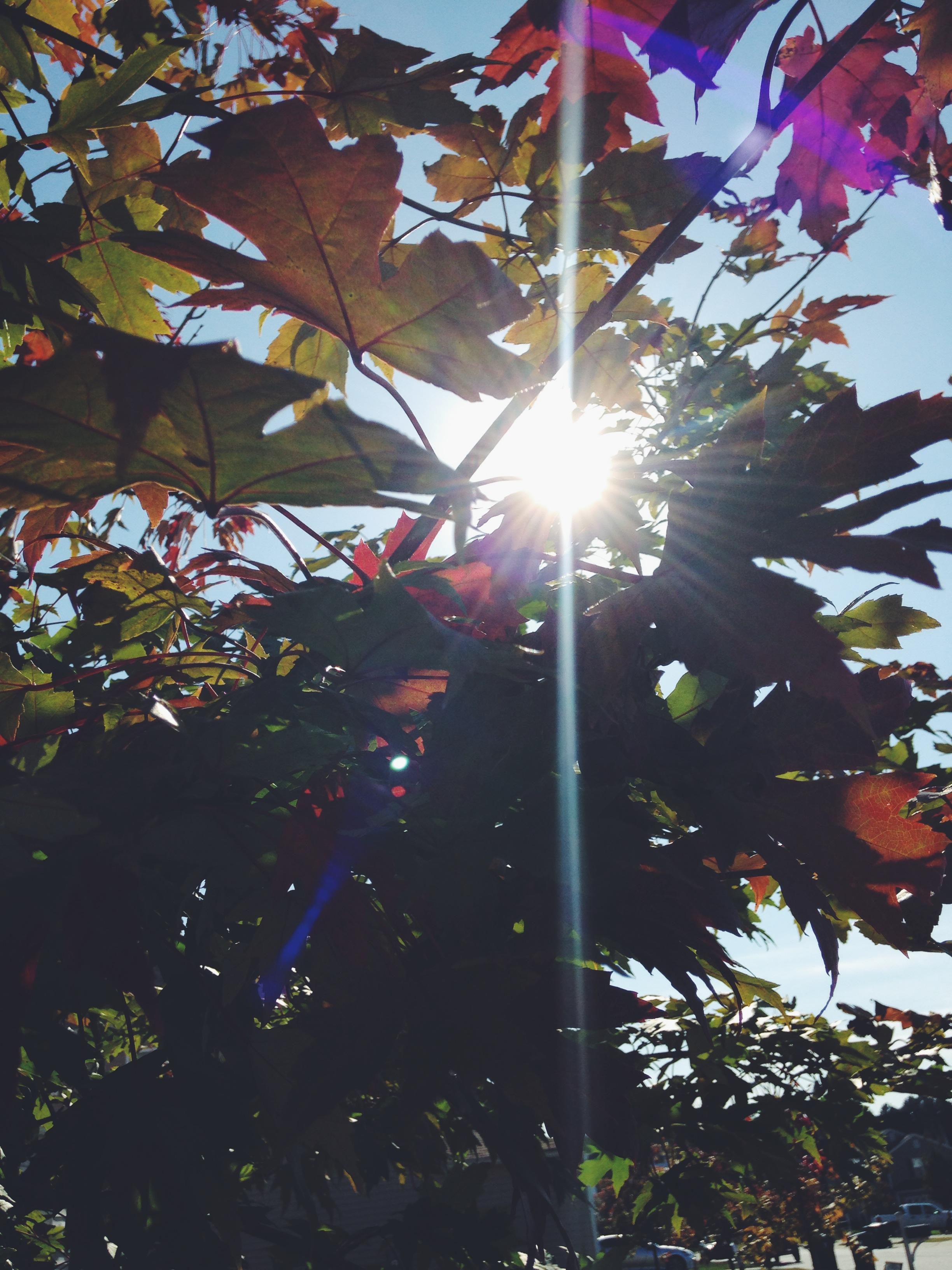 fall2014_7