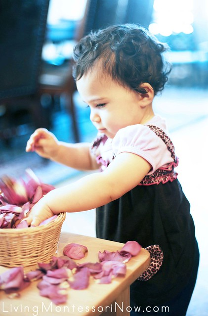 Exploring the Rose Petal Treasure Basket