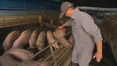 張勝哲取得安全農法及產銷履歷等認證