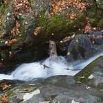 Log with water, Shenandoah