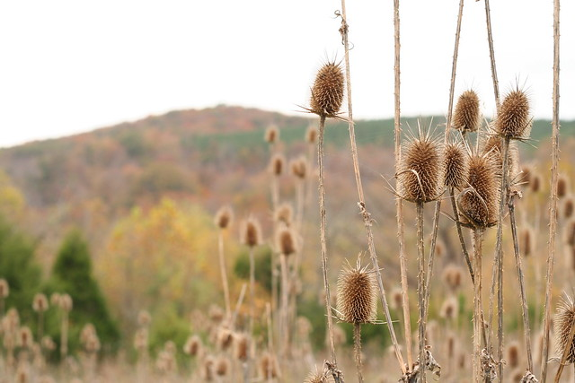 James River State Park Fall 2014 (143)