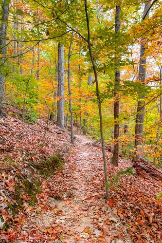 usa fall landscape geotagged photography unitedstates nashville hiking tennessee hdr percywarnerpark photomatix redtrail warnerparks nashvillehikingmeetup vaughnsgap canon7dmkii geo:lat=3606536500 sigma18250mmf3563dcmacrooshsm geo:lon=8689421833 mossyrdigetrail