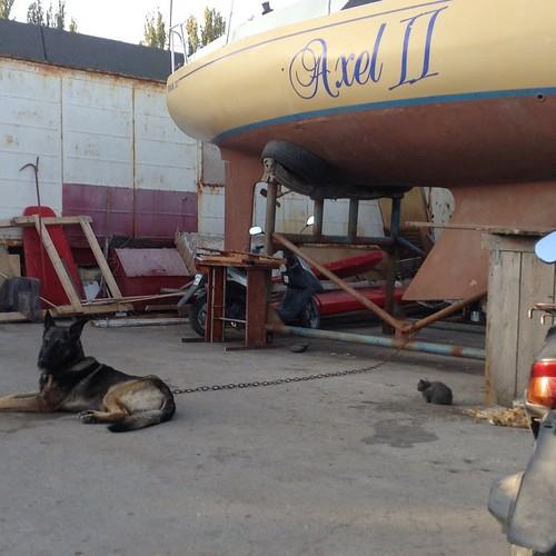В порту. Сторожевой пес и котенок, который нашел себе самое безопасное место)) #евпатория  #крым  #путешествия