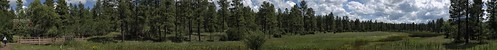 bigspringsenvironmentalstudyarea bigsprings arizona nature pinetop pinetoparizona pinetoplakeside landscape panorama riparian riparianzone riparianarea riparianhabitat