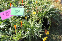 2014 Oct Plant Sale