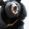 Unnamed bear (S2-A18)