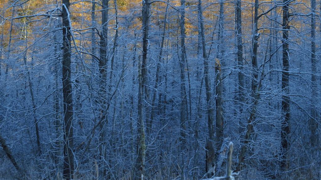 More Frozen Bush