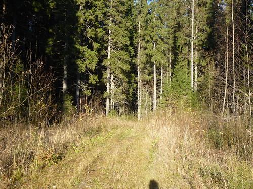 forest suomi finland lumix snapshot panasonic trail virrat metsä luontopolku näpsy dmc22tz