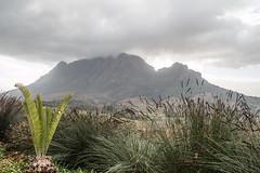 Sudafrica2014-115