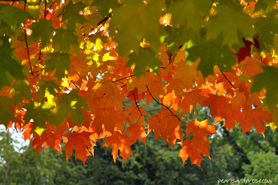 orange_maples_web