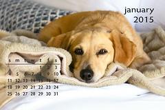 The 2015 Otto Calendar