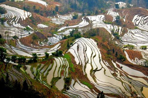 the beautiful Laohu rice terraces of the Yuanyang Hani rice terraces 1-DSC_5801