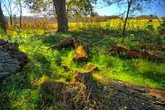Grassy glade